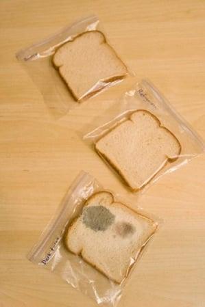 bread experiment_20170914081314
