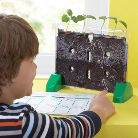 The  Sprout and Grow Window  lets children see first hand how a seed sprouts into a plant.