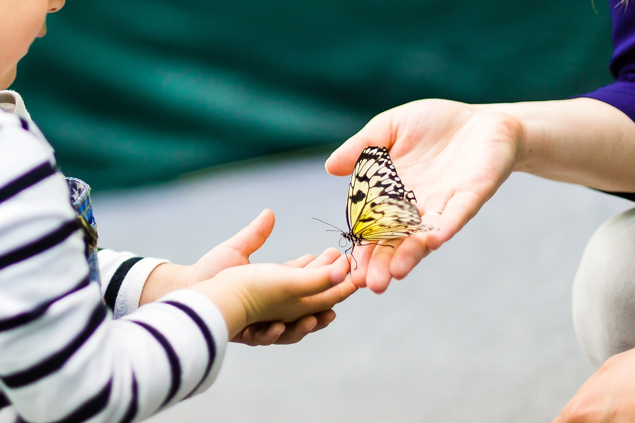 Introducing a Caterpillar and Butterfly Theme To Your Preschool Classroom